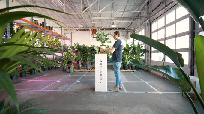 Léon & George delivers plants and nature to your home