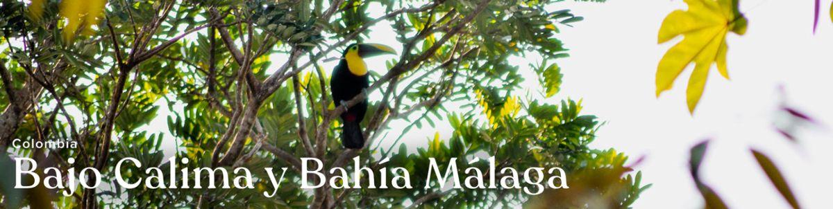 Bajo Calima y Bahia Malaga project