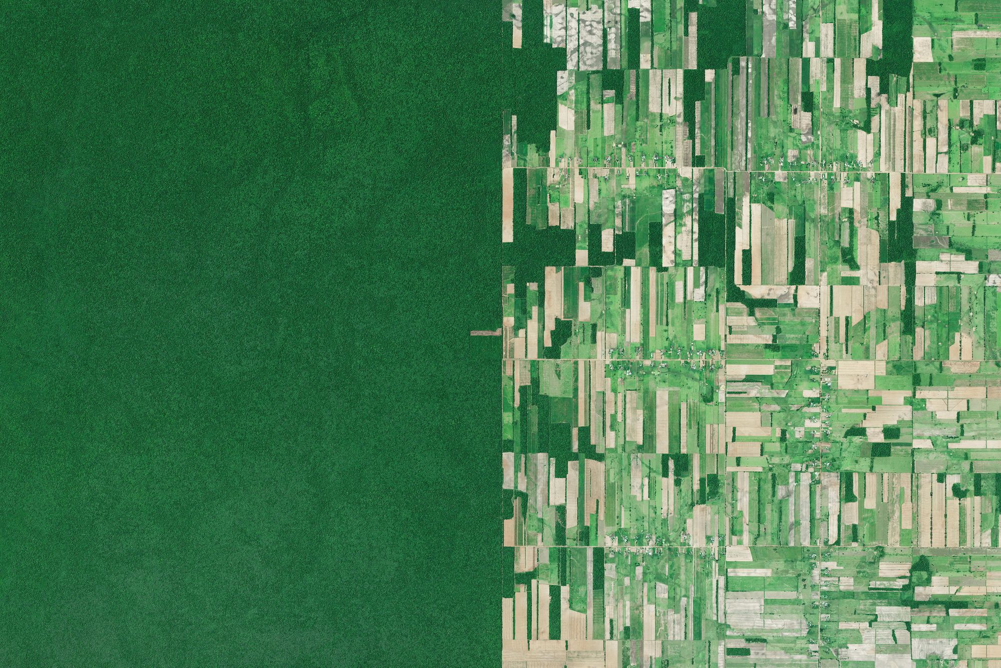 Rainforest in Santa Cruz, Bolivia is cleared for agriculture and cattle ranching. Image by Overview, source imagery (c) Maxar